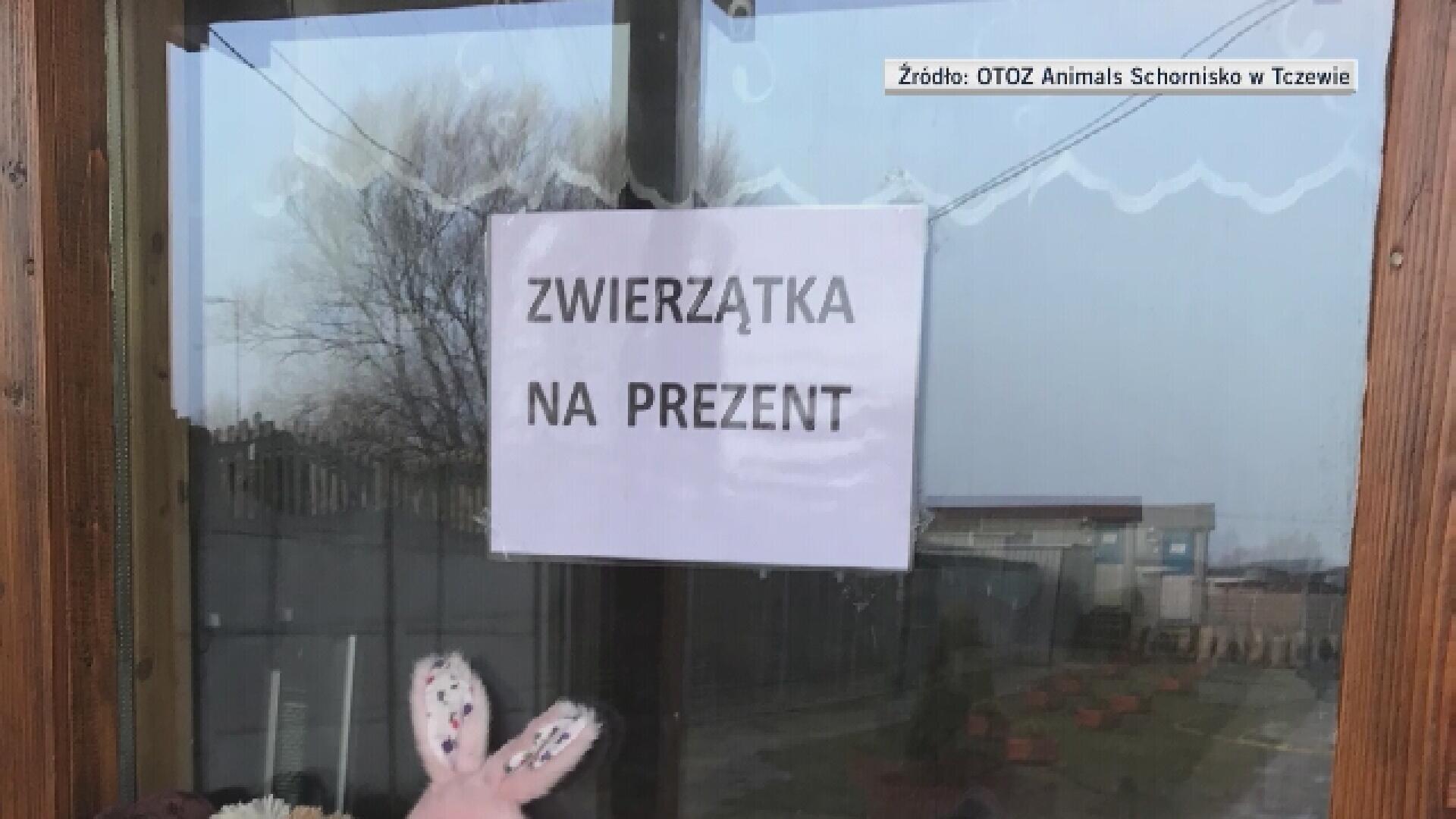 """d997dc3425356e Schronisko w Tczewie wymyśliło """"prezenciaki"""" ..."""