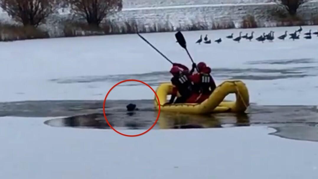 Pies tonął w lodowatej wodzie