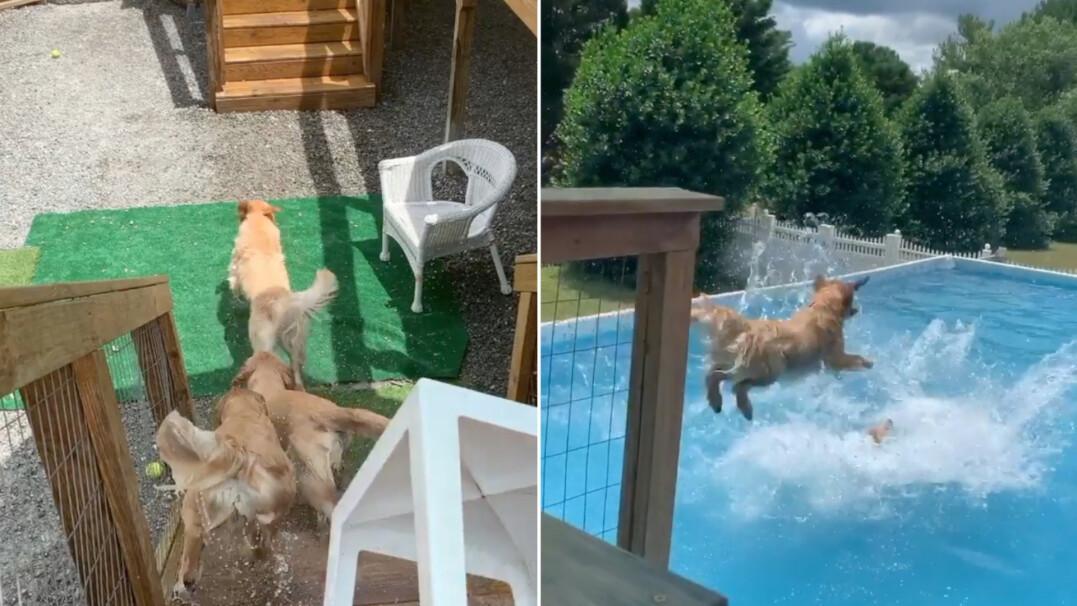 Rozpędzone i radosne wskakują do wody. Te psy skradły serca internautów