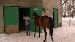 Konie przegrały ze śniegiem. Odwołano gonitwy na Służewcu